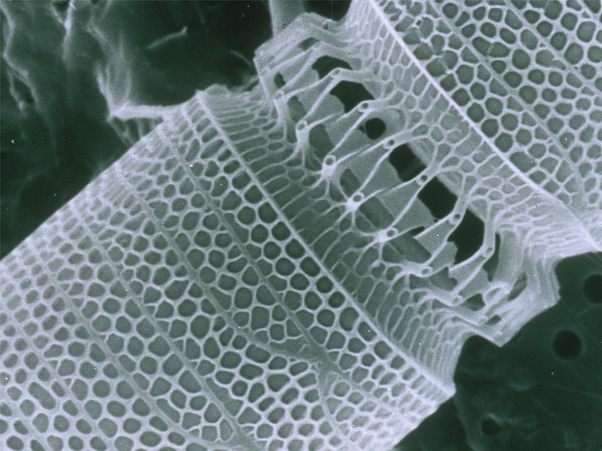 nanotubo al microscopio nanotecnologia