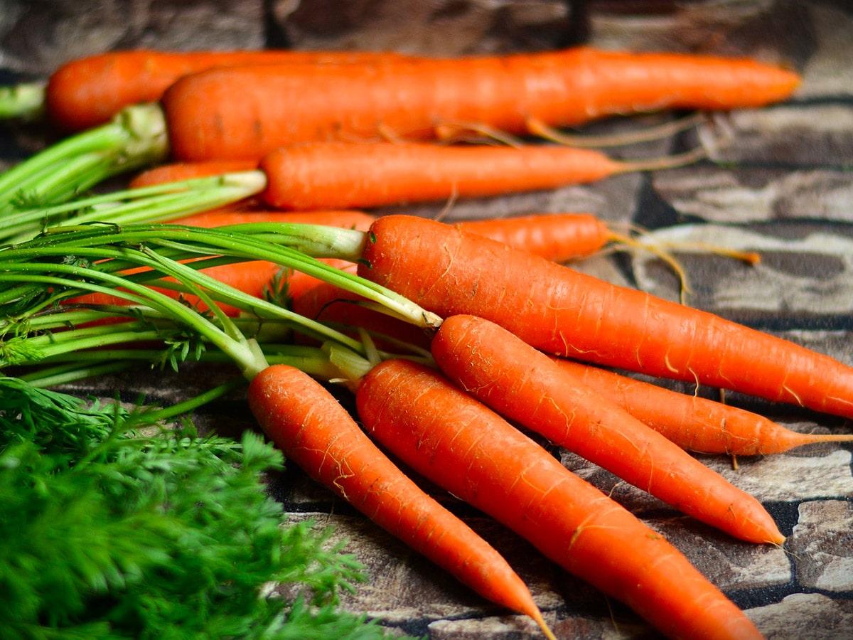 Морковь: выращивание, посадка и уход. Сорта моркови 61